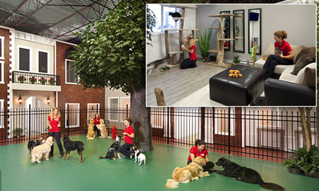 Happy Dog Hotel And Day Spa