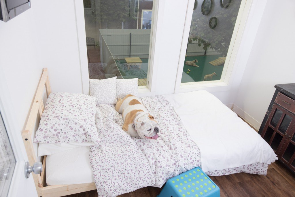 Jet Pet Resort's luxury suite for a dog
